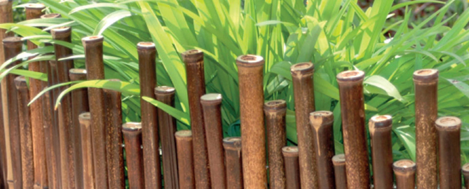 Vendita Piante Bambu Milano.Rosa Pietro E Figli Vendita Di Prodotti In Bambu Di Altissima Qualita